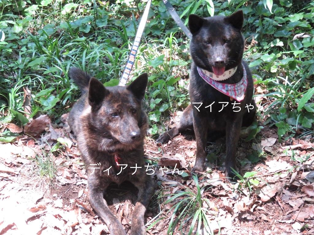 f:id:kai-koume:20180606142319j:image