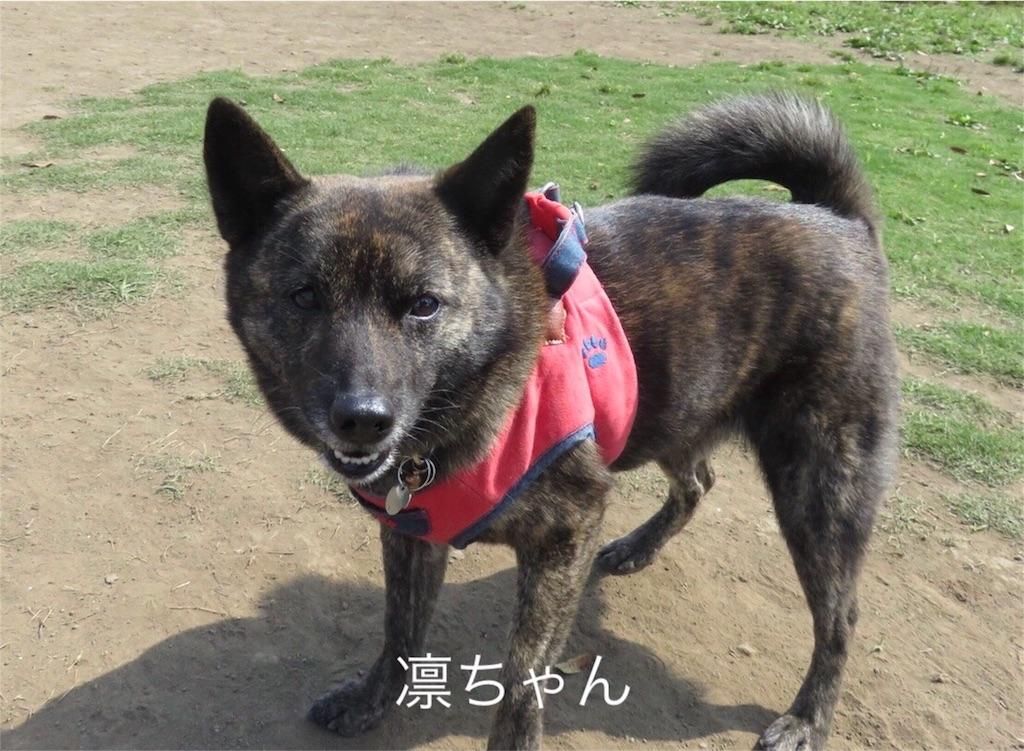 f:id:kai-koume:20180606183413j:image