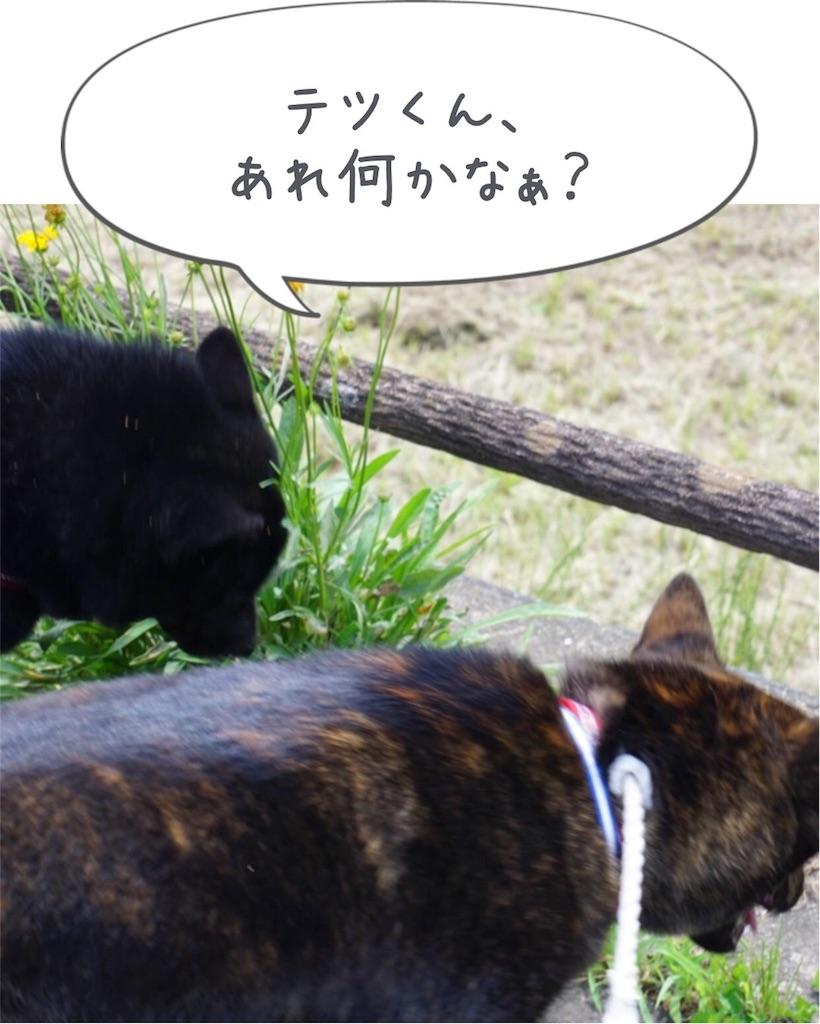 f:id:kai-koume:20180701134433j:image