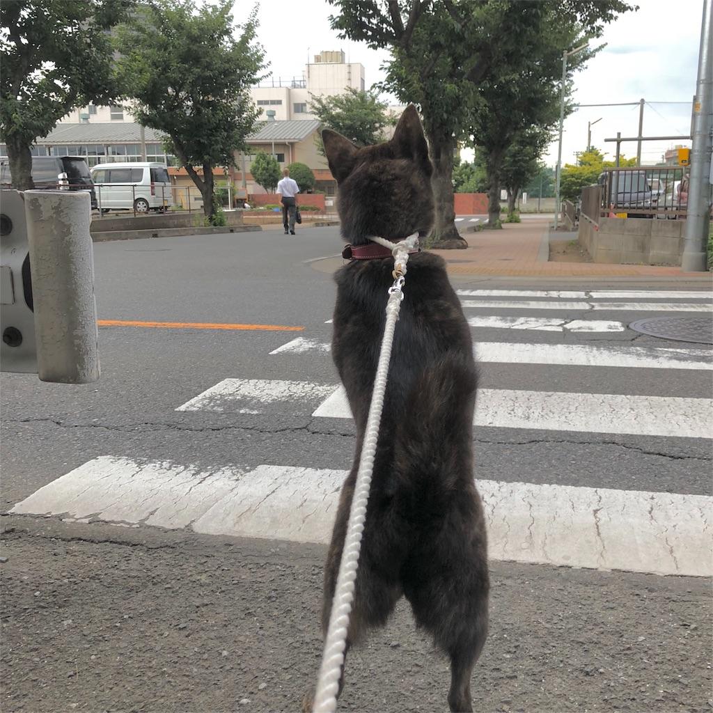 f:id:kai-koume:20180704075443j:image