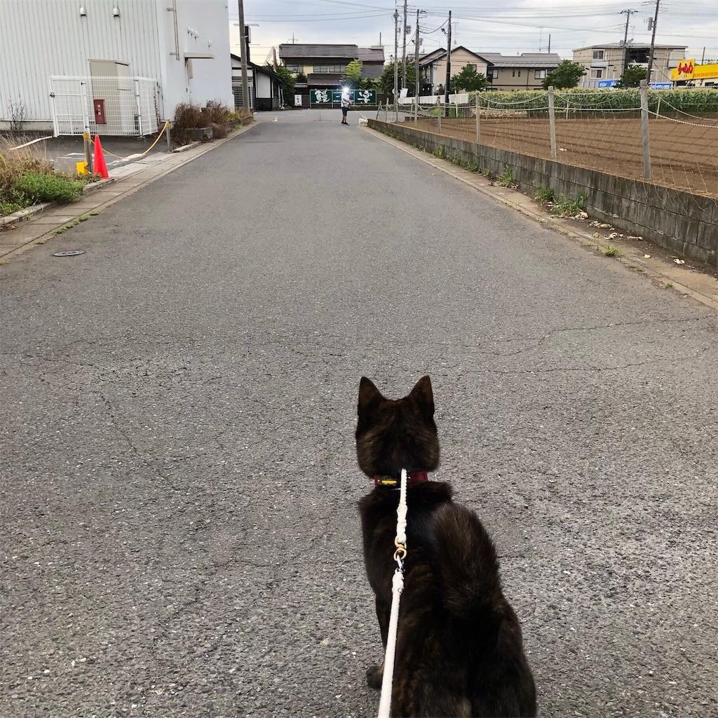 f:id:kai-koume:20180704081001j:image