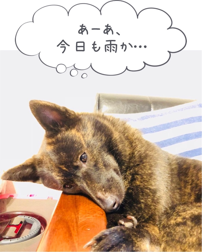 f:id:kai-koume:20180706075352j:image