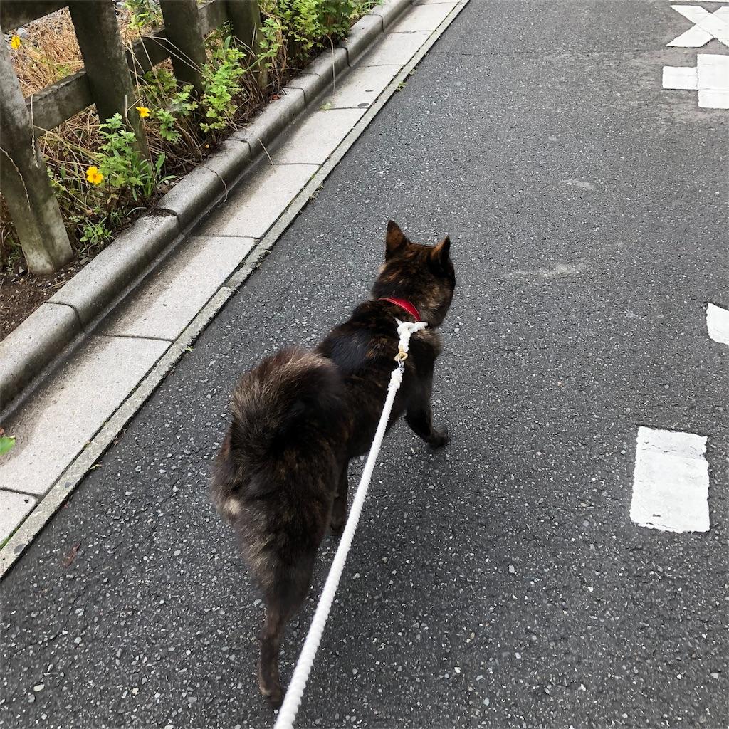 f:id:kai-koume:20180707105748j:image