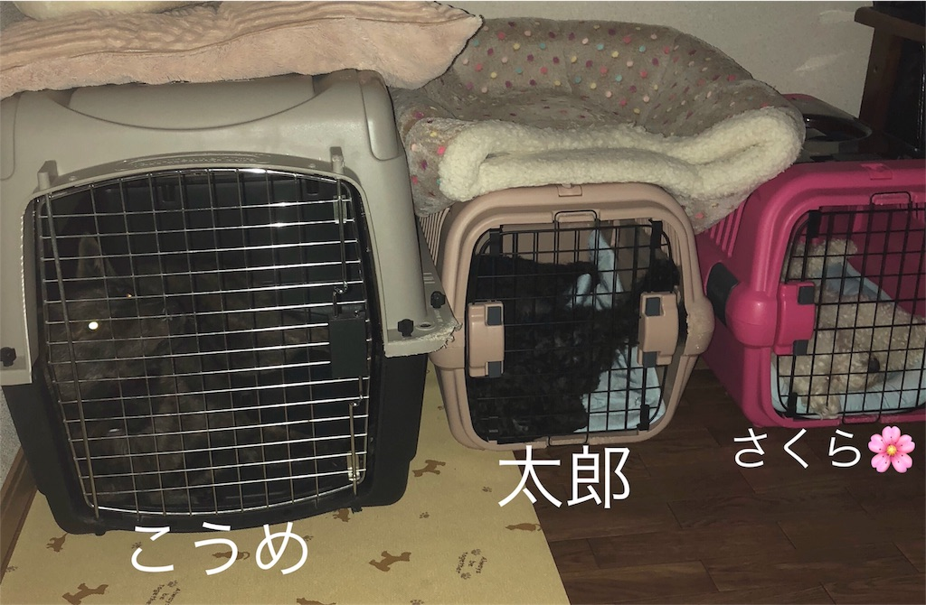 f:id:kai-koume:20180710074708j:image