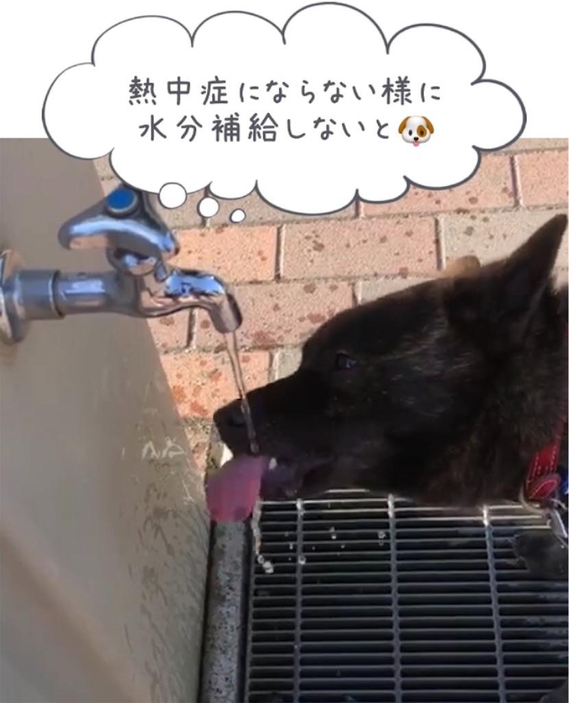 f:id:kai-koume:20180714100546j:image
