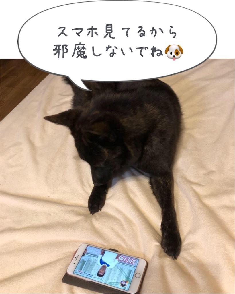 f:id:kai-koume:20180717065806j:image