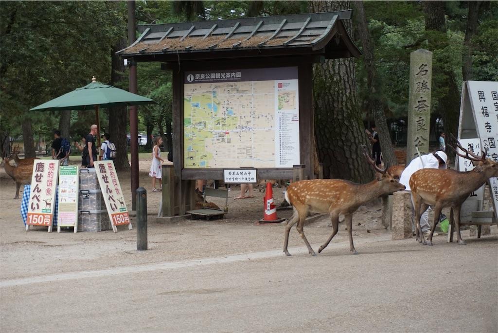f:id:kai-koume:20180811211919j:image