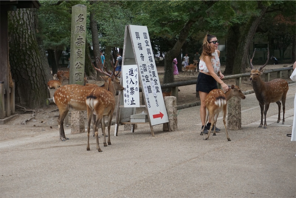 f:id:kai-koume:20180811211923j:image
