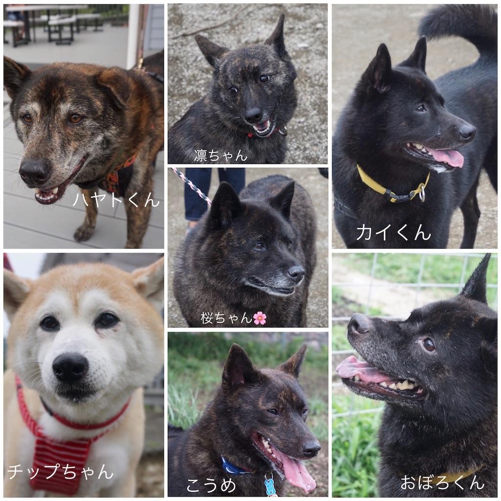 f:id:kai-koume:20180814092549j:image