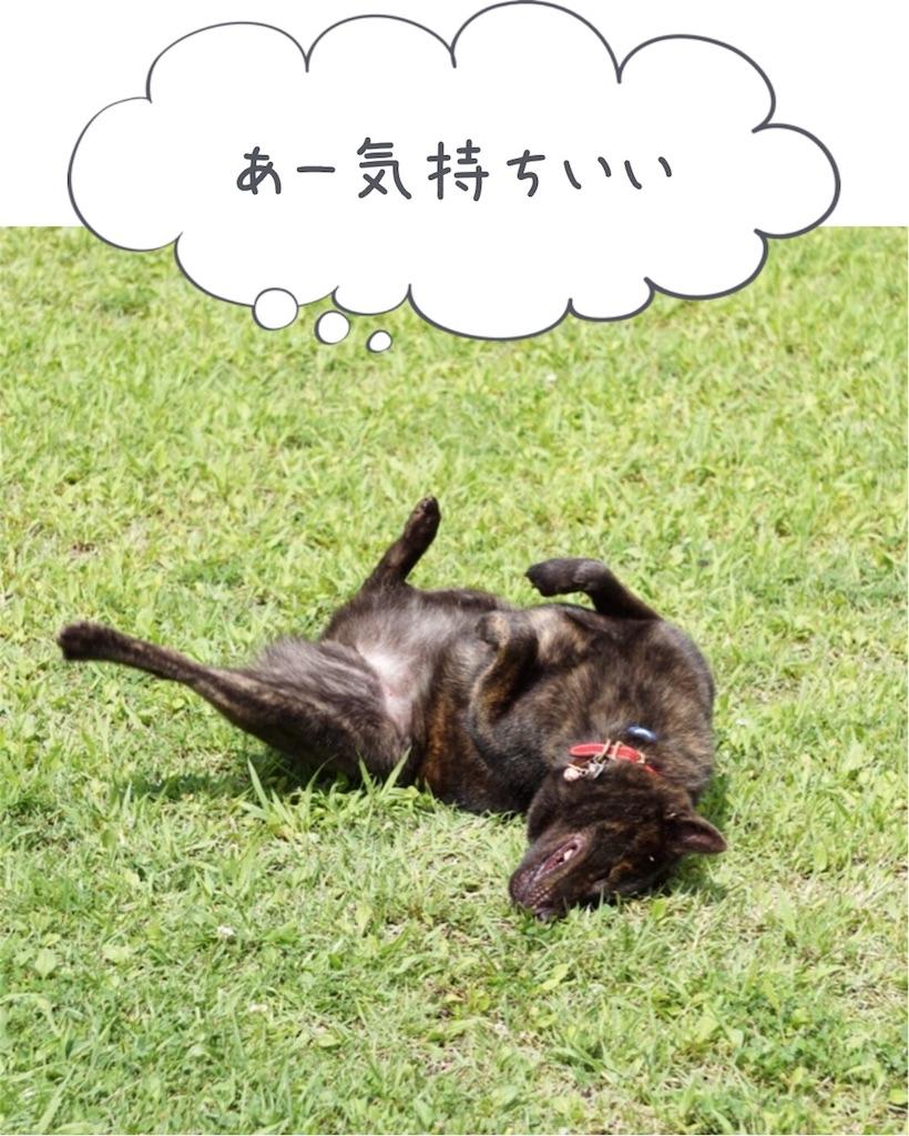 f:id:kai-koume:20180815100158j:image