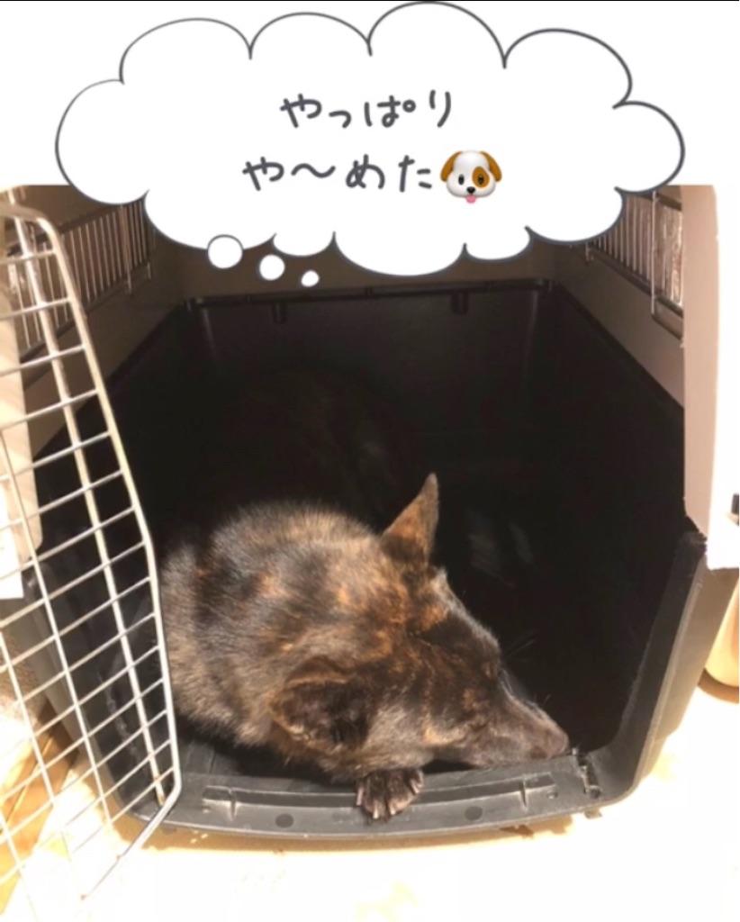 f:id:kai-koume:20180914074930j:image