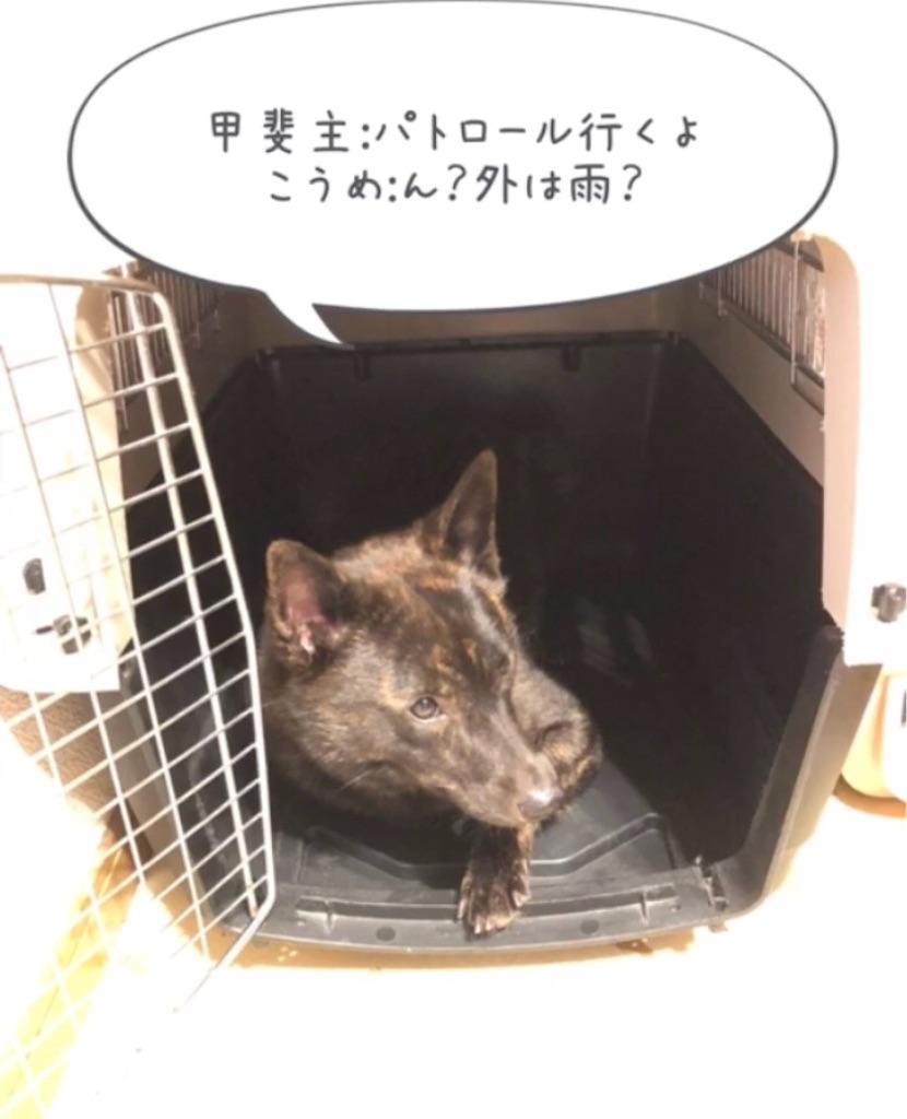 f:id:kai-koume:20180914074933j:image