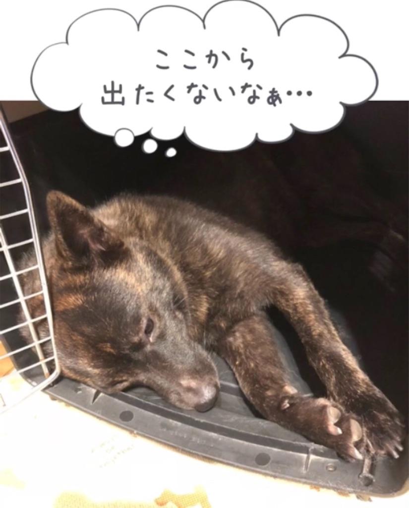 f:id:kai-koume:20180914074943j:image