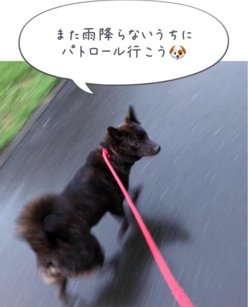 f:id:kai-koume:20180914080656j:image