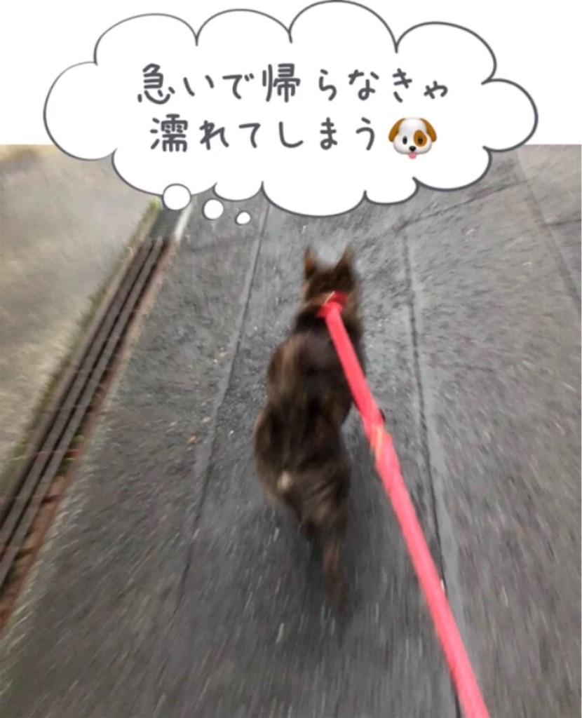 f:id:kai-koume:20180914080704j:image