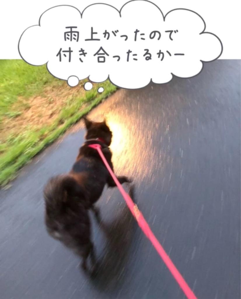 f:id:kai-koume:20180914081029j:image