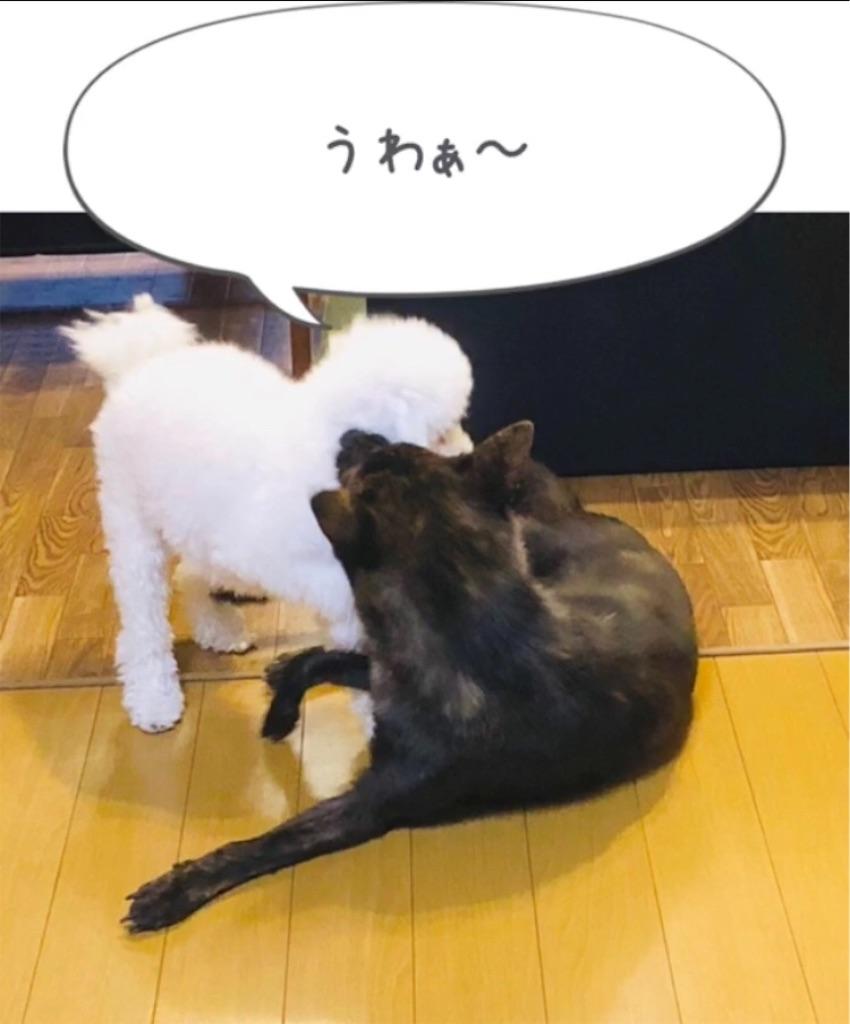 f:id:kai-koume:20181007091808j:image