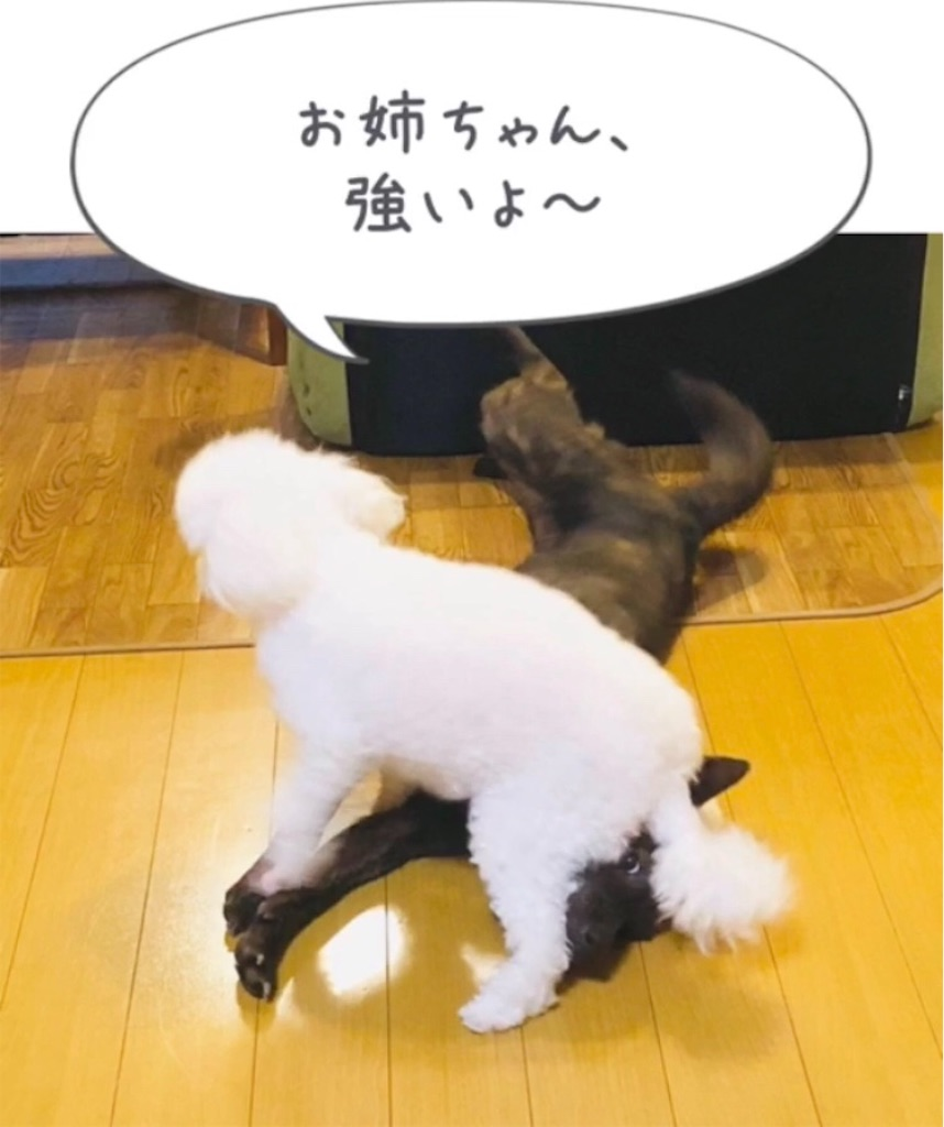 f:id:kai-koume:20181007091810j:image