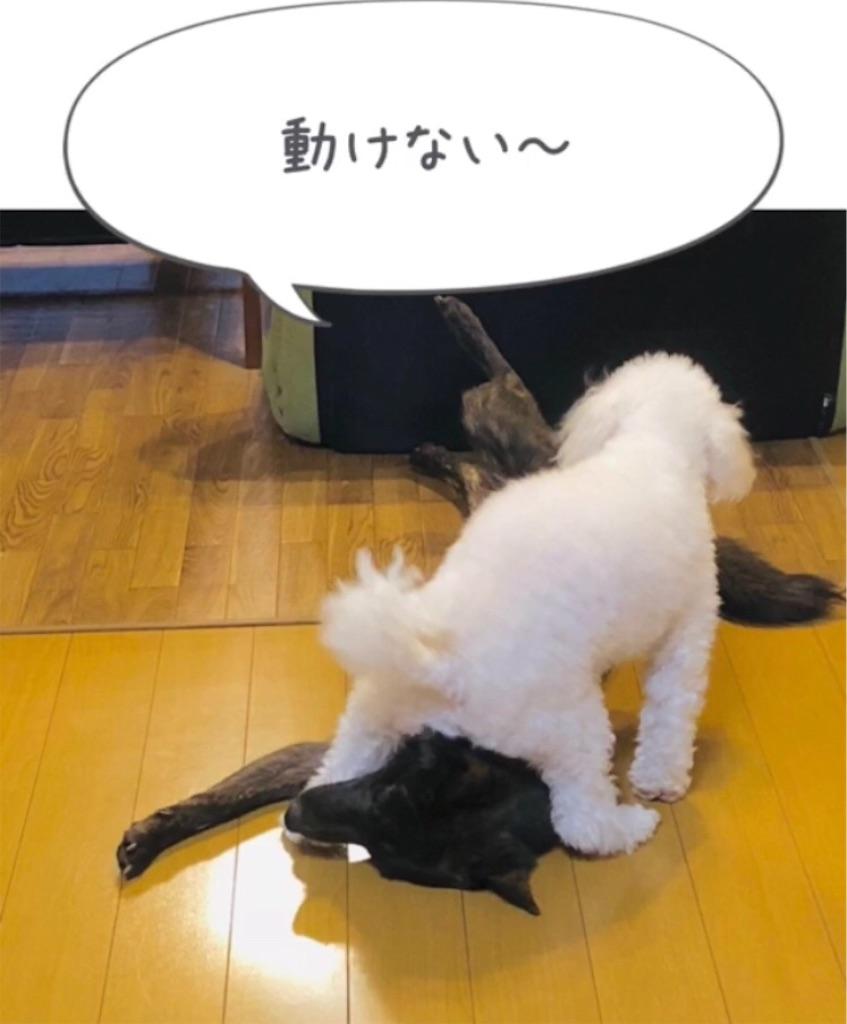f:id:kai-koume:20181007091815j:image