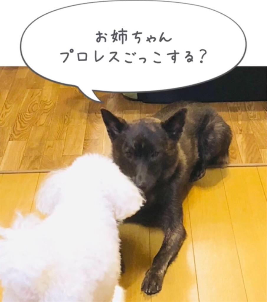 f:id:kai-koume:20181007091820j:image