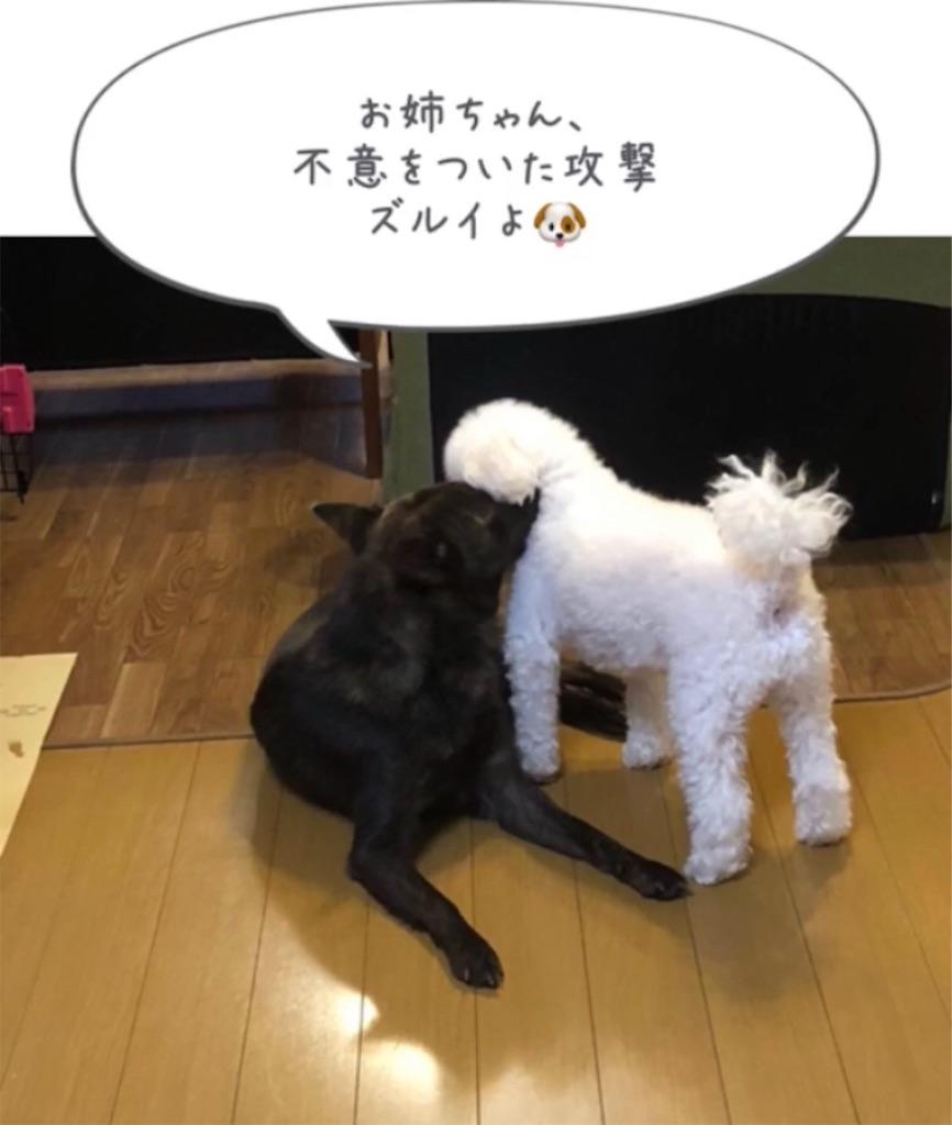 f:id:kai-koume:20181007091822j:image