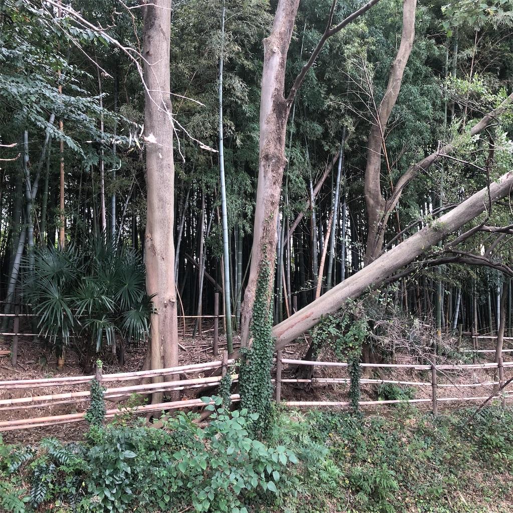f:id:kai-koume:20181009215735j:image