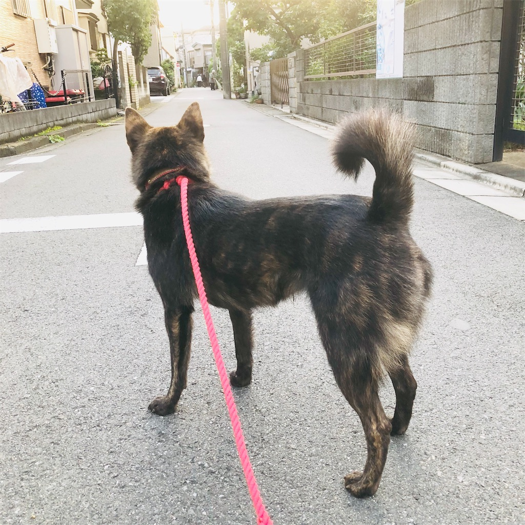 f:id:kai-koume:20181014210535j:image
