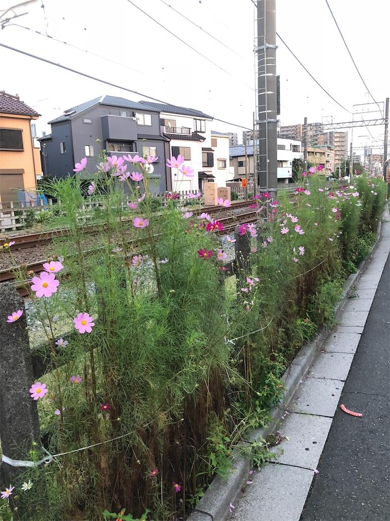 f:id:kai-koume:20181014210649j:image