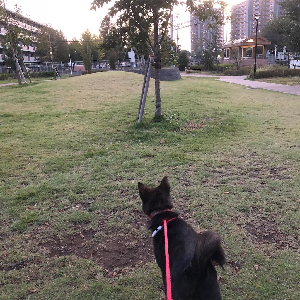f:id:kai-koume:20181018074549j:image