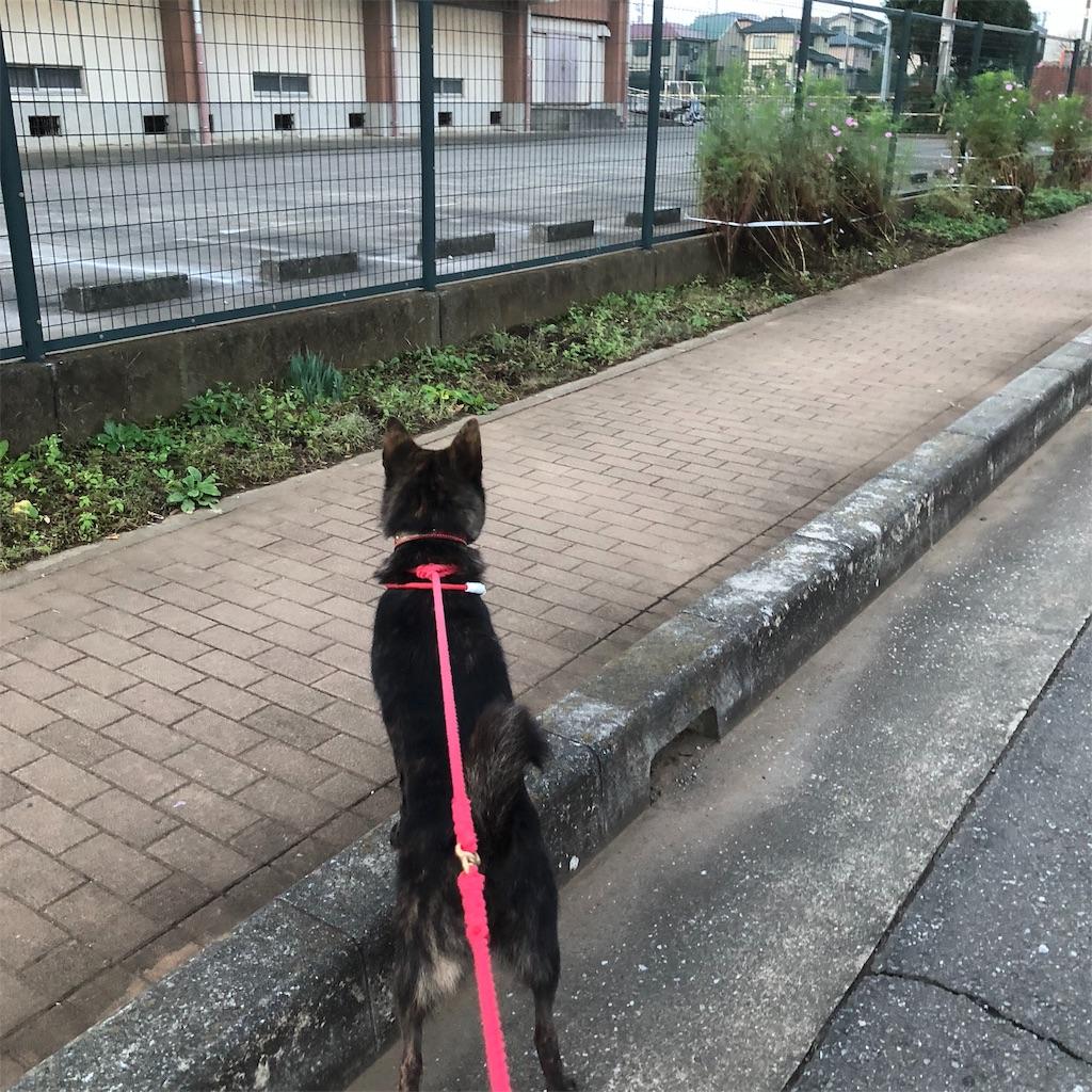 f:id:kai-koume:20181018074657j:image