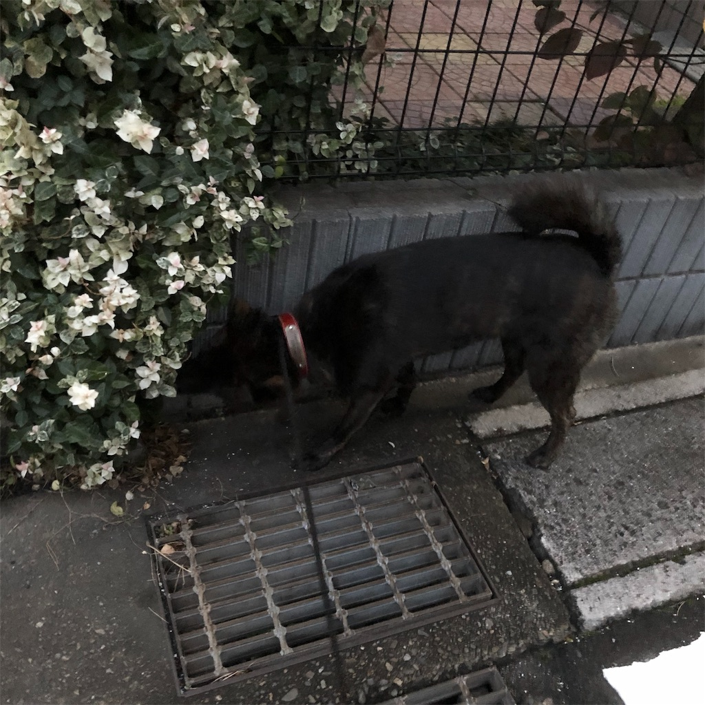 f:id:kai-koume:20181020085503j:image