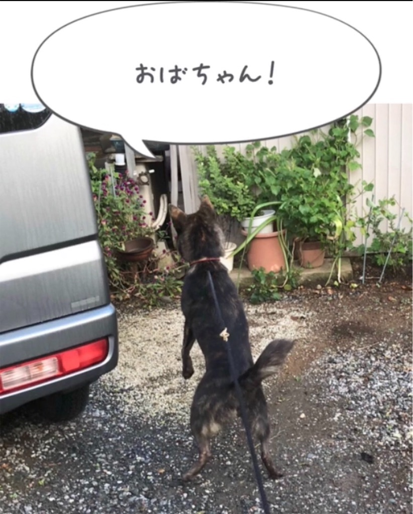 f:id:kai-koume:20181020090732j:image