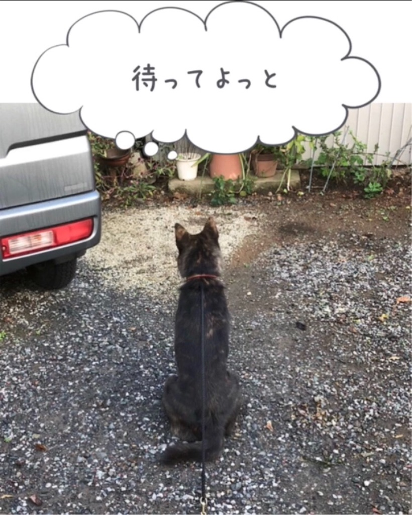 f:id:kai-koume:20181020090737j:image