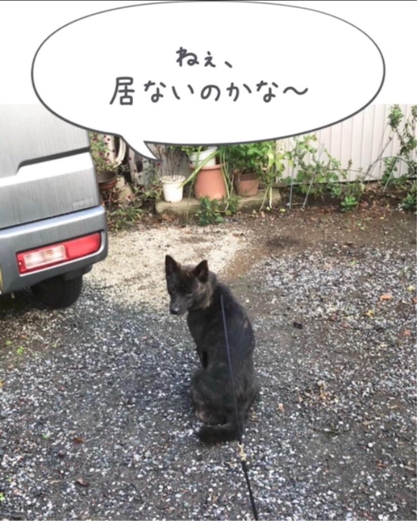 f:id:kai-koume:20181020090742j:image