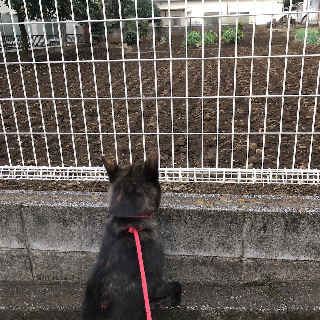 f:id:kai-koume:20181021053543j:image