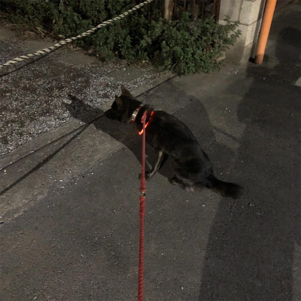 f:id:kai-koume:20181022063555j:image