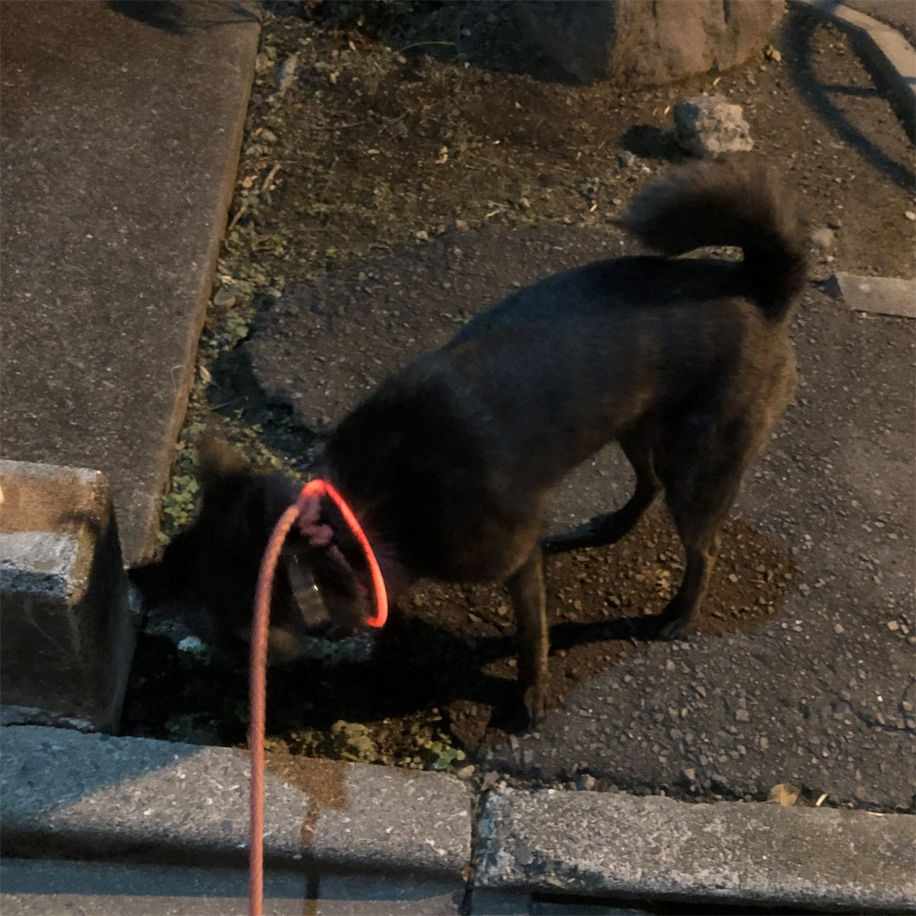 f:id:kai-koume:20181024065649j:image