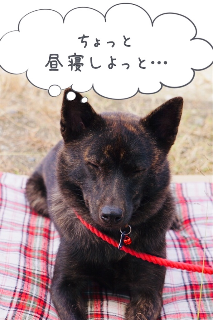 f:id:kai-koume:20181030215452j:image