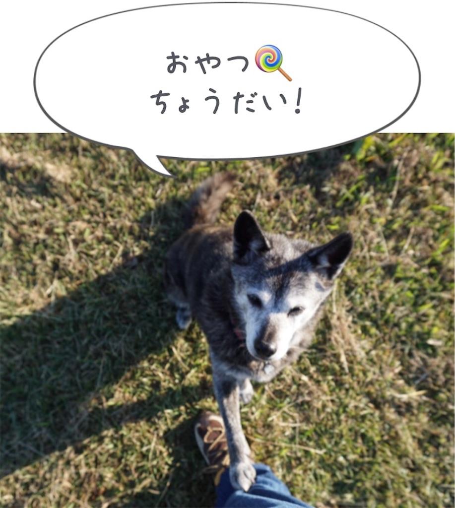f:id:kai-koume:20181104053415j:image