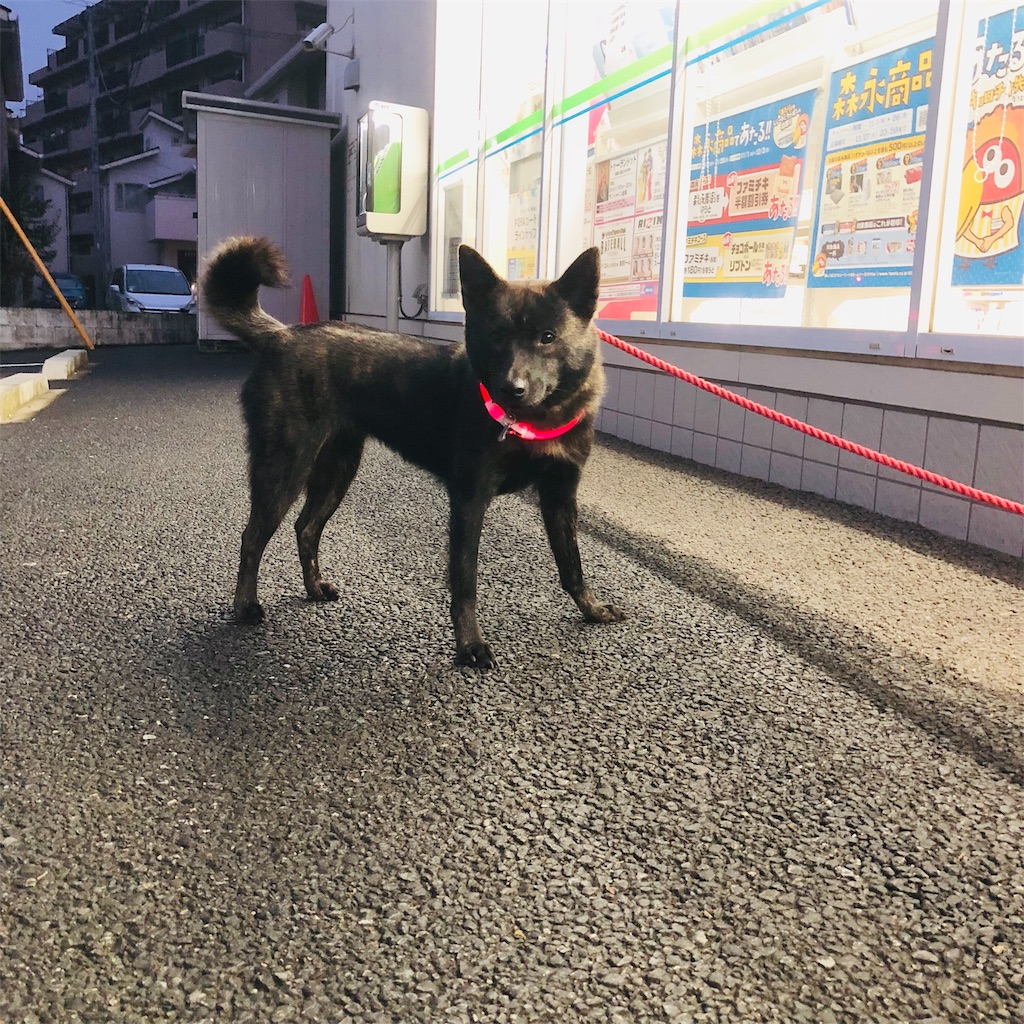 f:id:kai-koume:20181106080946j:image