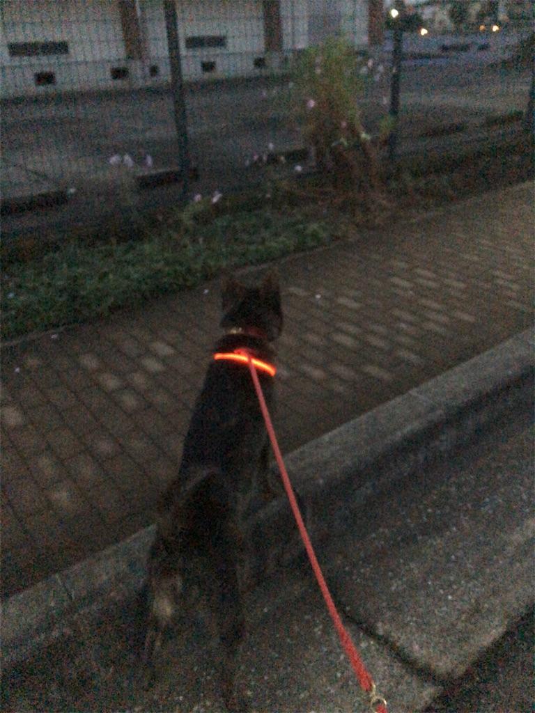 f:id:kai-koume:20181107132003j:image
