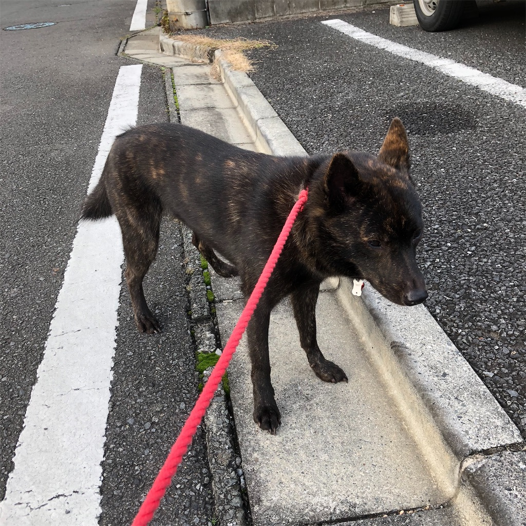 f:id:kai-koume:20181112061108j:image