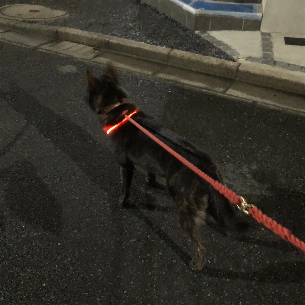 f:id:kai-koume:20181114073648j:image