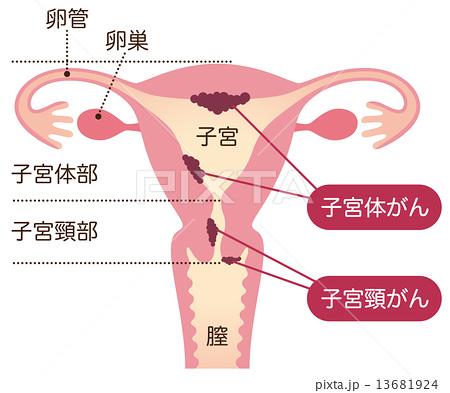 f:id:kaibashira-saki:20210725160018p:plain