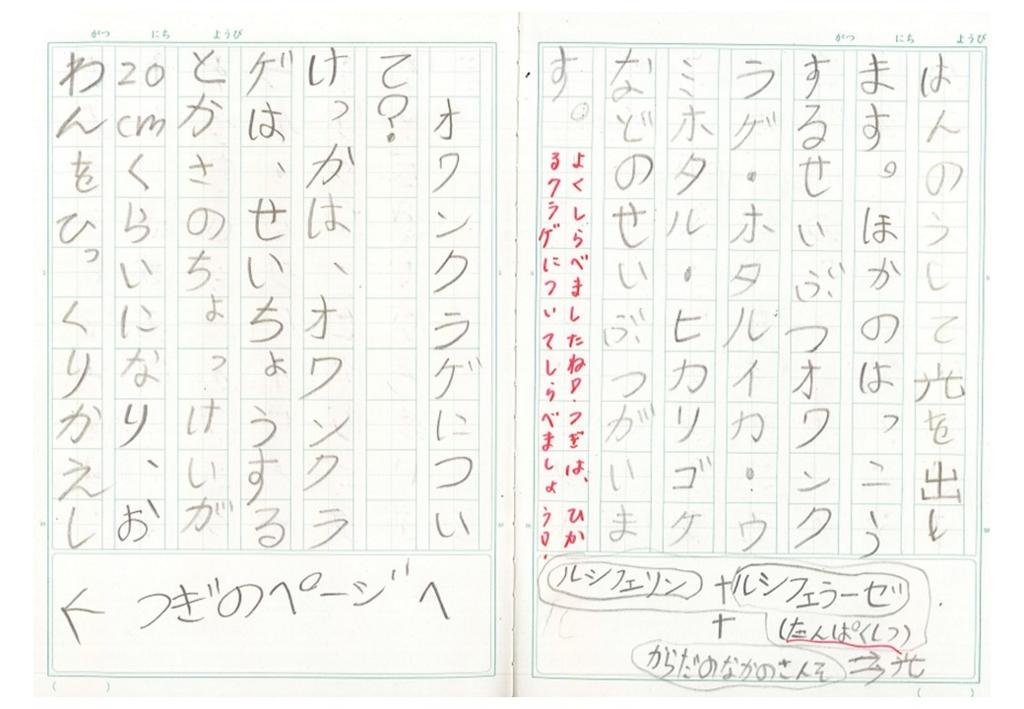 f:id:kaichinozomi:20170212101010j:plain