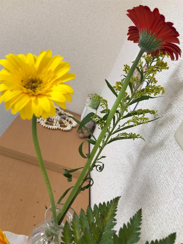 f:id:kaigaiwakuwaku:20210610124652j:image