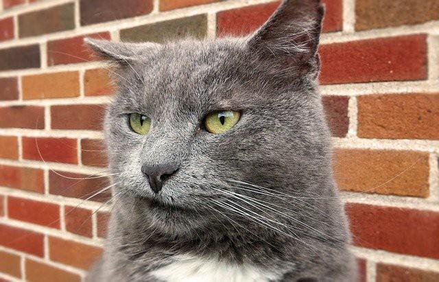猫が無表情で遠くを見つめている