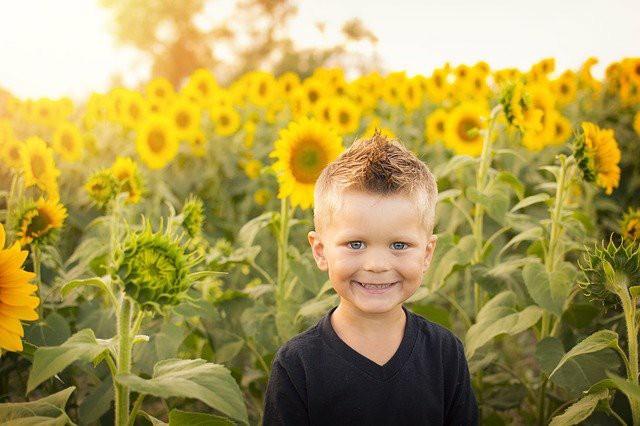ひまわり畑で少年が笑っている