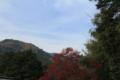 紅葉と青空 11月30日 嵐山 「京都新聞写真コンテスト」