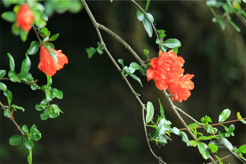 f:id:kaisyayametaina:20170618213008j:image
